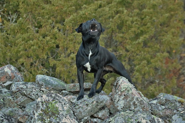 5 Tips to Help Stop Dog Barking