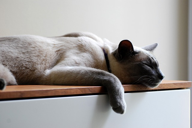 Study Shows that Vomiting in Cats is often a Sign of Serious Disease