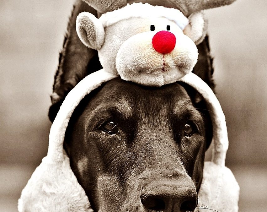 5 Tips to Protect Your Dog This Holiday Season